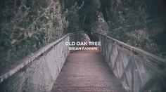 That Old Oak Tree - Brian Fannin // OFFICIAL Lyric Video