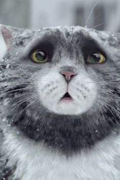 Clumsy Cat's Christmas Calamity Captured In Heartwarming Viral Ad