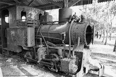Pinhal do Rei: Outra vez o Comboio de Lata