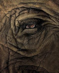 #Elephant eye, #skin #texture  I don't get the attraction to elephants. They seem so sad and all knowing.