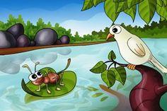 Uma formiga sedenta veio à margem do rio para beber água. Para alcançá-la, devia descer por uma folha de grama. Quando assim fazia, escorregou e caiu dentro da correnteza. Uma pomba, pousada numa árvore próxima, viu a formiga em perigo. Rapidamente, arrancou uma folha da árvore e deixou-a cair no rio, perto da formiga, que pode subir nela e flutuar até a margem. Logo que alcançou a terra, a formiga viu um caçador de pássaros, que se escondia atrás duma árvore, com uma rede nas mãos. Vendo…