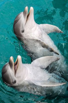 Dolphins  Are so Happy! Such a Cute Photo capturing the  Joy and Wonder of Dolphins.