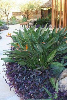 Florida Landscaping, Florida Gardening, Tropical Landscaping, Landscaping With Rocks, Outdoor Landscaping, Front Yard Landscaping, Outdoor Gardens, Landscaping Ideas, Inexpensive Landscaping