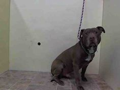 HELP...HARDLY ANY SHARES!!!! Please spread the word and SAVE RUPERT!!!!!Manhattan Center   RUPERT - A0995609  *** DOH HOLD 4/3/14 ***  MALE, BROWN / WHITE, PIT BULL / ROTTWEILER, 5 yrs SEIZED - ONHOLDHERE, HOLD FOR DOH-HB Reason BITEPEOPLE  Intake condition NONE Intake Date 04/03/2014, From NY 11419, DueOut Date , https://www.facebook.com/photo.php?fbid=782154571797424&set=a.617938651552351.1073741868.152876678058553&type=3&theater
