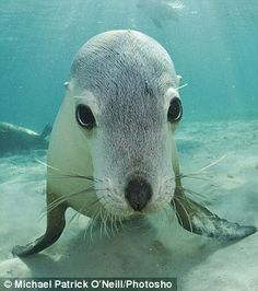 Posing for the camera: A curious sea lion pup