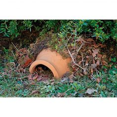 Ceramic Hedgehog House - Hedgehogs are a protected species (as well as helping you in the garden by eating snails). They need some sort of… – Ceramic Hedgehog House