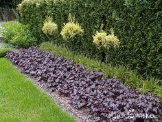 """Moja """"przyziemna"""" :) pasja - strona 798 - Forum ogrodnicze - Ogrodowisko"""