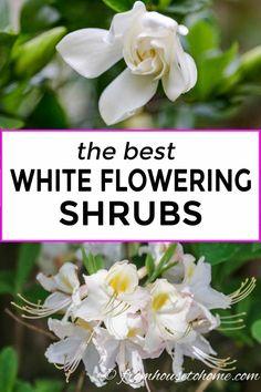 Of The Best White Flowering Shrubs – Gardening @ From House To Home – Perennial Garden Full Sun Shrubs, Full Sun Perennials, Full Sun Plants, Shade Perennials, Shade Plants, Garden Shrubs, Shade Garden, Garden Landscaping, Landscaping Ideas