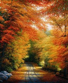 autumn, fall, leaves, color, red