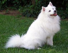 Cute special dog http://ift.tt/2sfd1tr