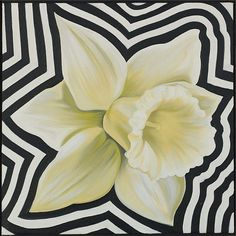 Lowell Nesbitt , 1933-1993 White Electric Daffodil oil on canvas
