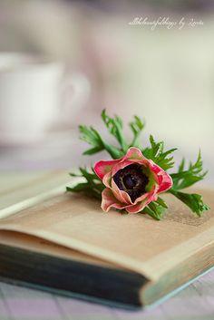 Anemone ♥ by loretoidas, via Flickr