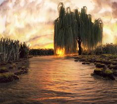 weeping willow dream
