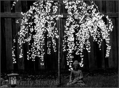Buddha Tree  copyright Wendy Blomseth