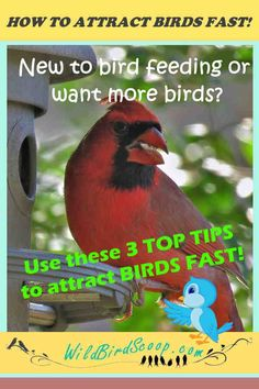 3 Top Tips On How To Attract Birds Fast Whether you are a brand-new lover of wild birds or a seasoned backyard birder here are some top tips that will help you learn how to attract birds fast. Squirrel Proof Bird Feeders, Wild Birds Unlimited, Viewing Wildlife, How To Attract Birds, Deciduous Trees, Backyard Birds, Small Birds, Outdoor Art