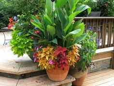 Container Gardening Pictures | we love container gardens love them nothing says welcome like a piece ...