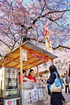 Cherry blossoms Ueno Park Tokyo japan