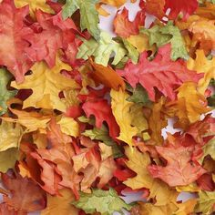 Miniature Fall Oak Leaves