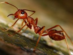 Fight an Ant Invasion Naturally with These 8 Tips by survivallife #HowtoGetRidofAntsNaturally