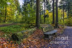 Autumn Walks by Ian Mitchell Snowdonia National Park, Autumn Walks, Walking By, Roads, Fine Art America, Woodland, National Parks, Wall Art, Outdoor Decor
