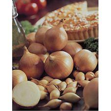 Wilko Onions Allium Centurion x 50  14/21