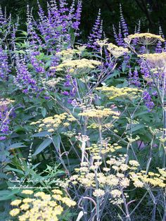 Vitex & tall Bronze Fennel (Garden of Len & Barb Rosen)- these would work as meadow accents. Plant Design, Garden Design, Beautiful Gardens, Beautiful Flowers, Border Plants, Purple Garden, Mellow Yellow, Yellow Cream, Plants