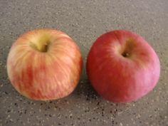 DIY Hangover Cure (1) Apple Celery Ginger Juice  http://easydiy365.com/?p=26617