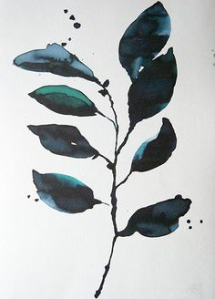 Eucalyptus - Stilleben DK