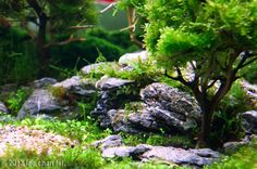2013 AGA Aquascaping Contest - Entry #265