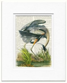 NEW - Audubon 1800's Great Blue Heron artwork