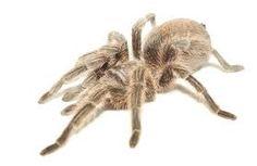 Resultado de imagem para fotos gratis,da aranha de pata longa