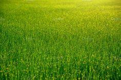 Green Grass Field by salmon.black on @creativemarket