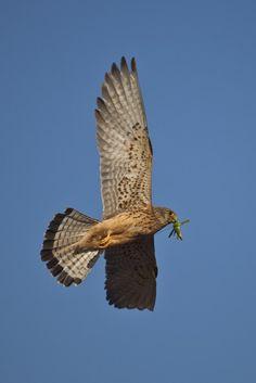 Vassilis Artikos Photography - Birds