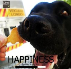 100% natural & organic salmon snacks for dogs +info: streatdogbiscuits@gmail.com https://www.facebook.com/StreatBiscuits