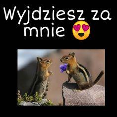 #mem#memes#memy#smiesznememy#��miesznememy#memes😂 #polskie#polska#Polish#polskiememy#polishmemes#polishgirl#czarny#wiewiurki#zarenczyny&nbs Animals And Pets, Cute Dogs, Memes, Funny, Pets, Meme, Funny Parenting, Funny Dogs, Hilarious