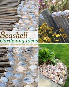 How to use your seashells collected from the beach outside. in the garden or in pots! Featured on Completely Coastal. Seaside Garden, Seaside Decor, Coastal Decor, Beach Gardens, Small Gardens, Outdoor Gardens, Backyard Games, Backyard Landscaping, Backyard Beach