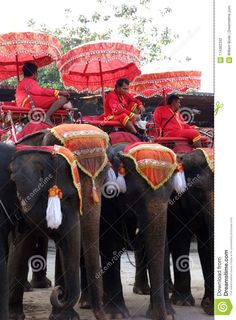Royal Elephant Rides In Thailand Editorial Photography - Image of decorative, tour: 114362332 Image Photography, Editorial Photography, Elephant Ride, Thailand, Scene, Tours, Stage