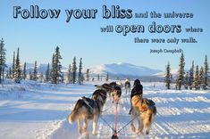 ❤️Hit That Share Button To Motivate Your Friends & Family❤️ • • • #MondayMotivation #MotivationMonday #quotes #quoteoftheday #motivationalquotes #PuppyLove #PawPrints #Happiness #LancasterPuppies www.LancasterPuppies.com Puppy Quotes, Lancaster Puppies, Teamwork, Monday Motivation, Dog Training, Puppy Love, Quote Of The Day, Bliss, Husky