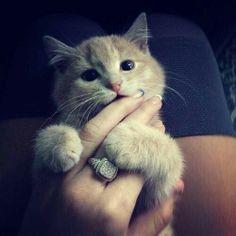 How cute:3