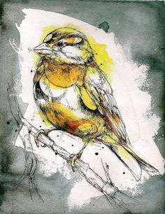 Abby Diamond: college student, observer of birds, super-skilled watercolor and ink artist… this girl is going to go places. I love the layered look in her pieces (watercolor painting + ink … Watercolor Paintings Of Animals, Watercolor Art Diy, Animal Paintings, Art Paintings, Diamond Drawing, Diamond Art, Diamond Graphic, Diamond Rings, Autocad 3d