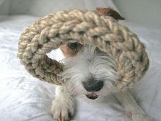 Team Parsons and Neroko LOOP www.klaino.net Merino Wool Blanket, Dogs, Animals, Animales, Animaux, Doggies, Animal, Animais, Dieren