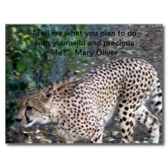 Wild and Precious Postcard Mary #Oliver Quote