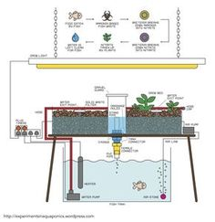 A Basic Guide To Building Your Own Aquaponics System (Click To Enlarge Image) Aquaponics is a technique enabling the sustainable production of edible fish and plants in a re-circulating system ... #Aquaponics #Hydroponics #Gardening