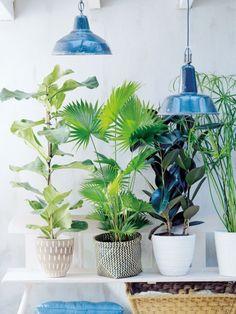 Zimmerpflanzen feiern gerade ihr großes Comeback. Denn sie sind nicht nur dekorativ, sie sorgen auch für Wohlbefinden und ein besseres Raumklima!