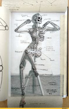 Exceptional Drawing The Human Figure Ideas. Staggering Drawing The Human Figure Ideas. Human Anatomy Drawing, Human Figure Drawing, Figure Drawing Reference, Body Drawing, Anatomy Reference, Drawing Ariel, Pose Reference, Skull Reference, Skeleton Drawings