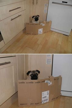 When this dog was imprisoned in kitchen cardboard jail.