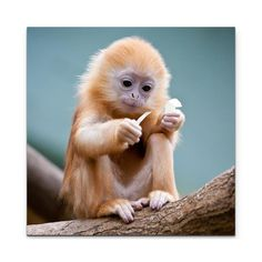 Cute Animal Pictures You Need To See, which makes you smile happily bilder von niedlichen tierbabys niedliche tierbilder mit … Cute Baby Monkey, Cute Baby Animals, Funny Animals, Baby Exotic Animals, Baby Wild Animals, Small Monkey, Funny Baby Pictures, Cute Animal Pictures, Monkey Pictures