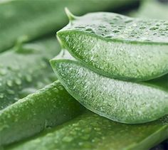 #1. Use Aloe Vera: Aloe vera is the green plant filled with a jelly-like substance with antibacterial and anti-inflammatory properties. Studies have shown that putting the gel direclty in the mouth and using it as a paste to brush your teeth, and/or mixing it up with water for a mouthwash has the effect of whitening your teeth and keeping your gum line healthy.