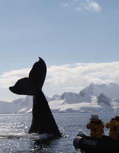 Quark Expeditions in Antarctica