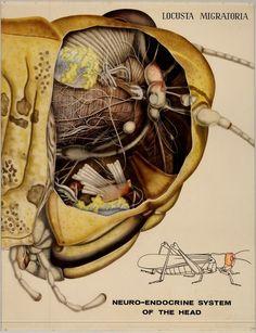 Historic Entomology